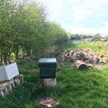 Glencullen Allotment Bee Hives