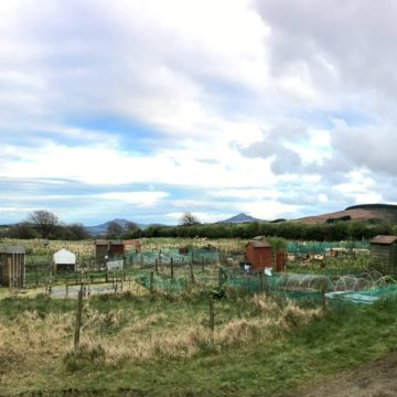 Glencullen Allotments May 2017