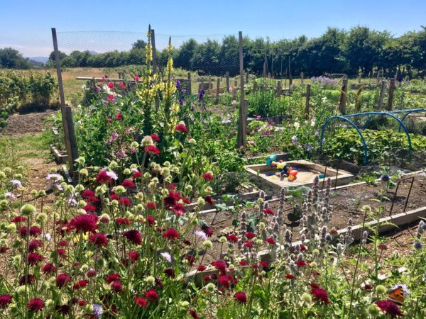 130 metre squared allotment