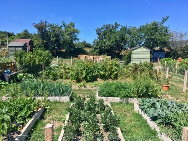 50 square metre allotment Glencullen Farm Dublin