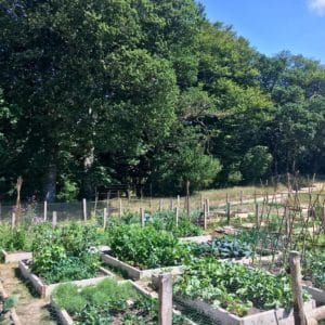 XXL Vegetable Garden Allotment Glencullen