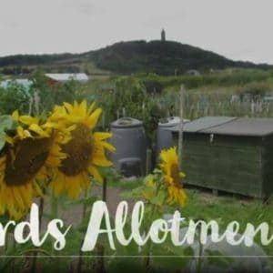 Your Allotment's Potential, Unearthed