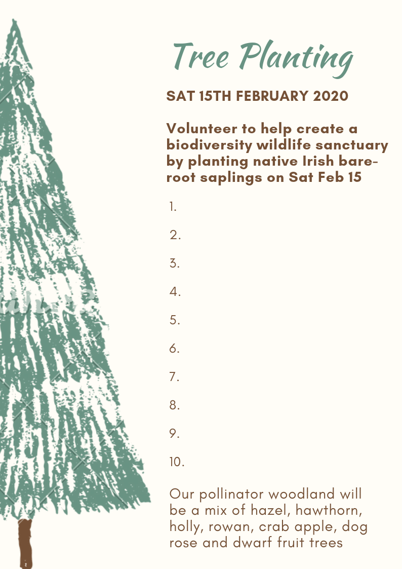 Tree planting Glencullen volunteer 2020